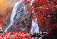 Deep forest beautiful waterfall with red leaves  Stock Photography