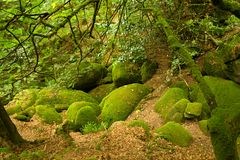 Deep forest in Brittany, France. Rocky deep forest in Brittany, France Stock Image