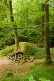Deep forest in Brittany, France. Rocky deep forest in Brittany, France Royalty Free Stock Image