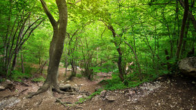 In deep forest Royalty Free Stock Photo