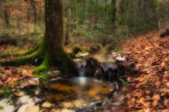 Deep Forest Creek Royalty Free Stock Photo