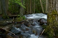 Deep Forest Creek Royalty Free Stock Photography