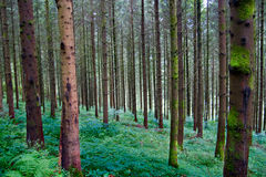 Deep forest in Germany Stock Photos