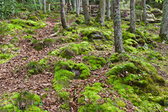 Free Deep Forest In Normandy Royalty Free Stock Photo - 26677095