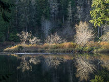 Deep Forest Lake Royalty Free Stock Images