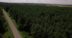 Deep forest landscape aerial view. Beautiful deep forest and road landscape aerial view on a summer day stock video footage
