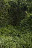 Deep Forest, Lush Tropical Rainforest in North India, Background Stock Images