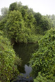 Deep Forest, Lush Tropical Rainforest in North India. Deep Forest, Lush Tropical Rainforest and river in North India, Thickets. Calm Forest Landscape Stock Image