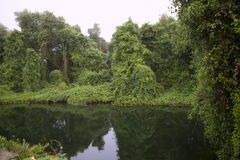 Deep Forest, Lush Tropical Rainforest in North India. Thickets. Calm Forest Landscape Royalty Free Stock Images