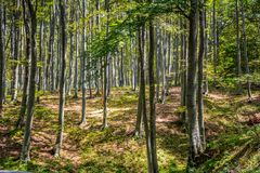 A deep forest. With many trees Stock Images