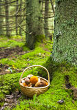Deep forest and mushrooms basket Royalty Free Stock Photo