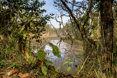 Deep forest in Nepal jungle (Chitwan). Royalty Free Stock Photo
