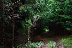 Deep forest path. Magic mysterious deep forest path Stock Image