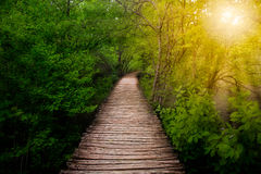 Deep forest pathway in the sunshine stock photography