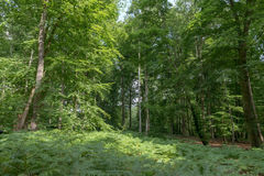 Deep forest Royalty Free Stock Image