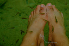 In deep forest and pond with fish spa pedicure wellness skin car. E treatment also called doctor fish, nibble fish and kangal fish Stock Photo