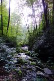 Deep Forest Ravine Stock Photos