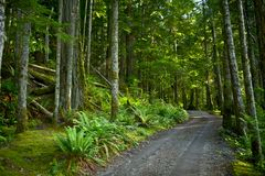 Deep Forest Road Royalty Free Stock Photography