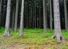 Deep forest Stock Images