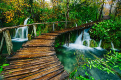 Deep forest stream with crystal clear water with pathway. Plitvice lakes Royalty Free Stock Photos