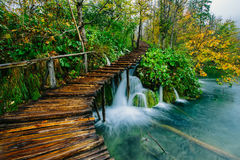 Deep forest stream with crystal clear water with pathway. Plitvice lakes royalty free stock images