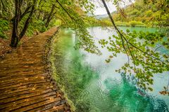 Deep forest stream. Crystal clear water. Plitvice lakes, Croatia stock photos