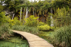 Deep forest stream. Crystal clear water. Plitvice lakes, Croatia Stock Images