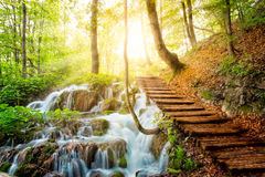 Deep forest stream with crystal clear water in the sunshine. Plitvice lakes, Croatia royalty free stock photo