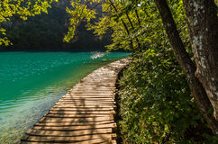 Deep forest stream path with crystal clear water in the sunshine. Plitvice lakes, Croatia royalty free stock photos
