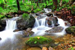 Deep forest Waterfall. Beautiful waterfall in the middle of the woods Royalty Free Stock Photography