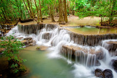 Deep forest Waterfall royalty free stock image