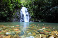 Free Deep Forest Waterfall Royalty Free Stock Photos - 44784618
