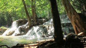 Deep forest waterfall with beautiful stock video