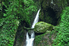 Deep forest waterfall Stock Photos