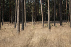 Deep forrest Royalty Free Stock Photos