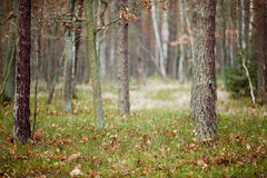 Deep Forrest Stock Photo