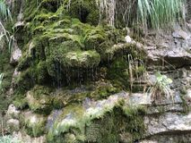 Deep forrest 1. Watter sliding down the Royalty Free Stock Images