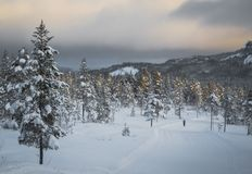 Deep fresh snow in norwegian forest. Boreal landscapes in winter royalty free stock images