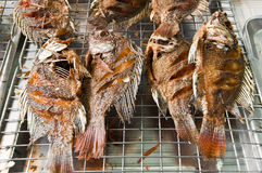 Deep fried fish. Stock Photo