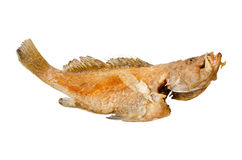Deep fried fish Royalty Free Stock Photos