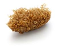 Deep fried honeycomb taro dumplings, chinese dim sum. On white background Stock Photo