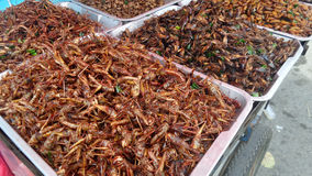 Deep fried insect vendor in Bangkok Stock Image