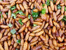 Deep fried insects and bugs Royalty Free Stock Images