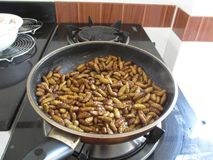 Deep fried insects for dinner in a pan, Thailand royalty free stock photo