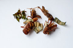 Deep-Fried insects Stock Image
