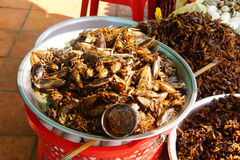 Deep fried insects Royalty Free Stock Photos