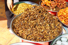 Deep fried insects Royalty Free Stock Images