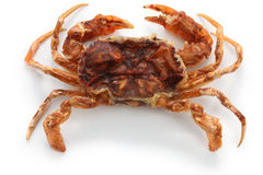 Deep fried soft shell crab Stock Photography