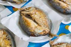 Deep fried Thai mackerel Stock Image
