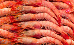 Deep frozen boiled shrimps. Royalty Free Stock Photo